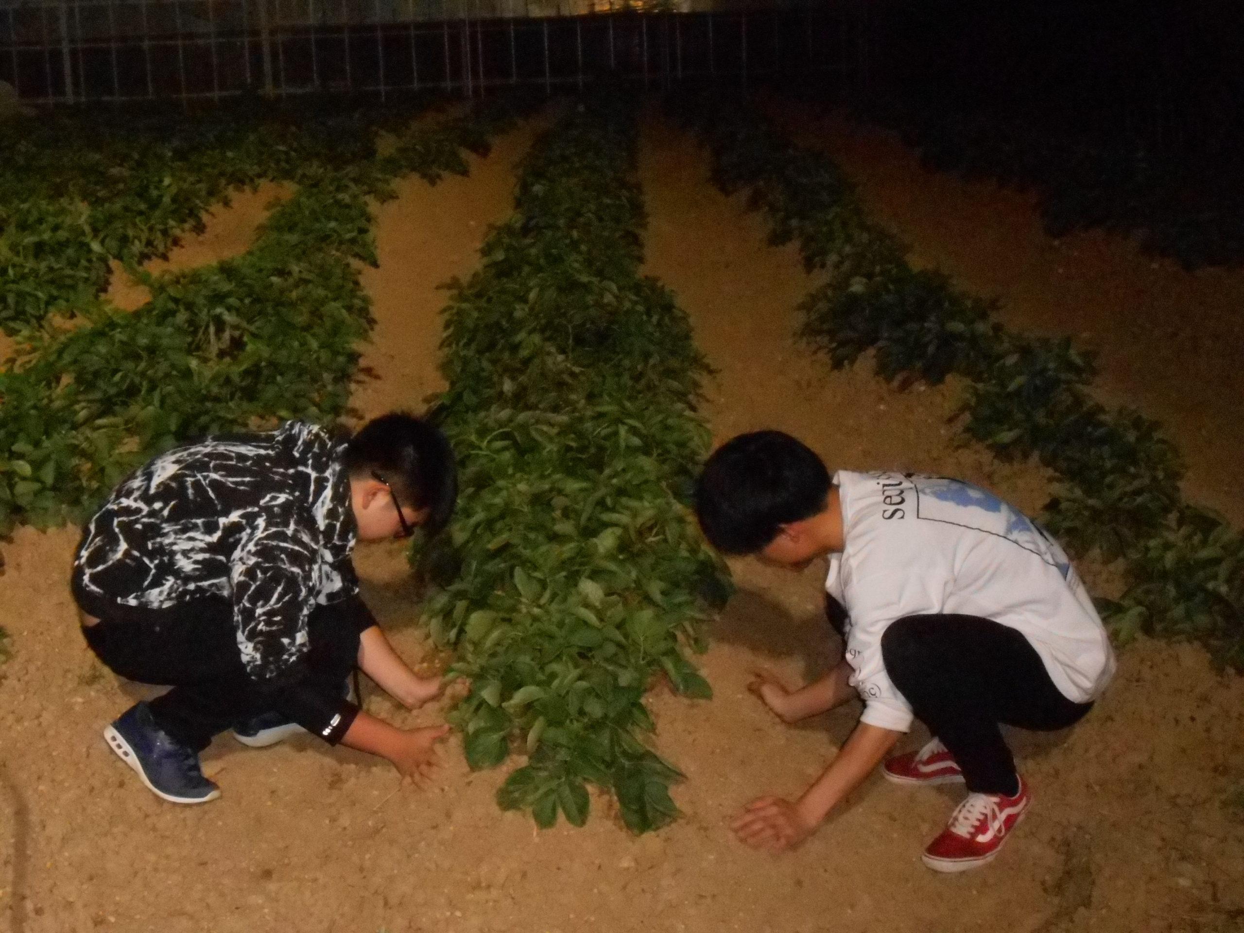 A野菜露地の写真を変更②-scaled.jpg